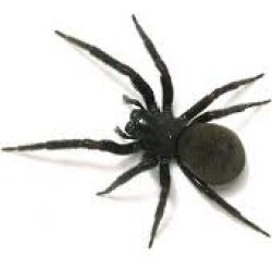 A black spider on a white background