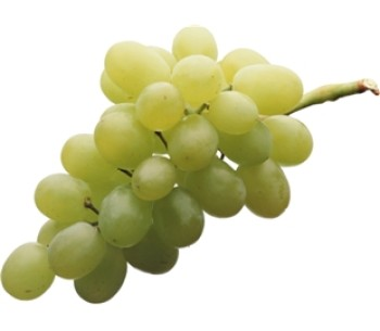 A bunch of green grapes