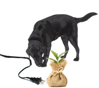 Jet with a plug and a plant in a hessian bag