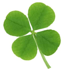 A four leaf clover on a white background
