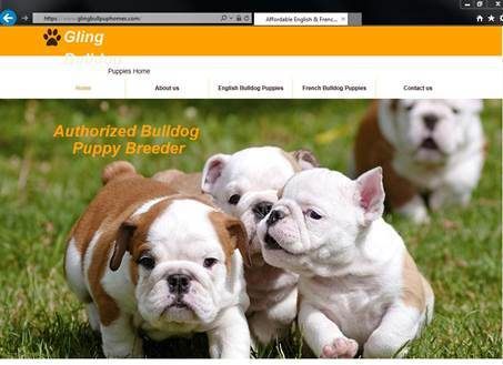 Fake bulldog puppy website