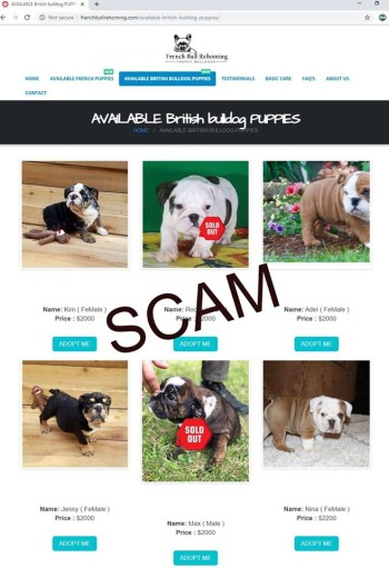 screenshot of fake brisish bulldog puppies weblisting